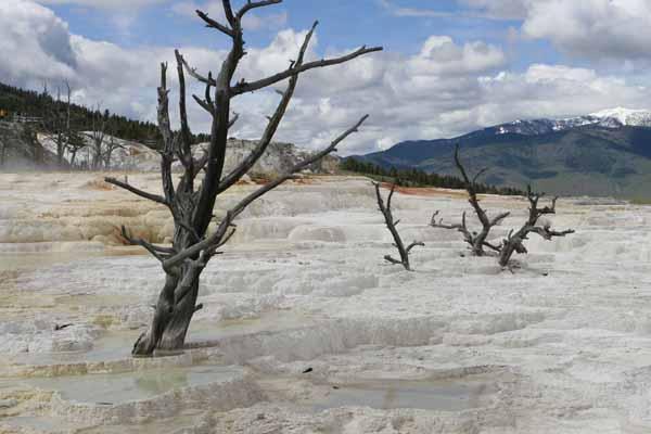 Yellowstone Mammoth 1