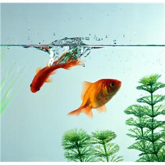 Dream interpretation 2 saving the fishies one at a time for Fish dream meaning