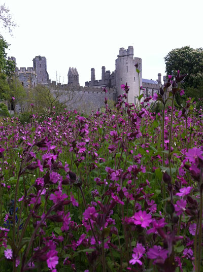 Castle-with-purple-flowers