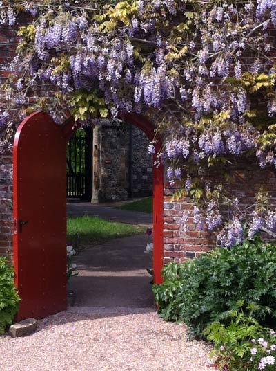 Garden-2-wisteria