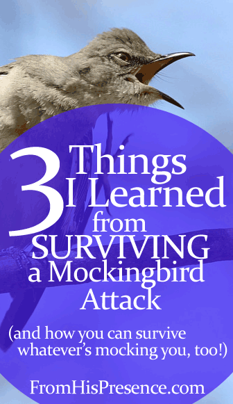 3 Things I Learned From Surviving a Mockingbird Attack