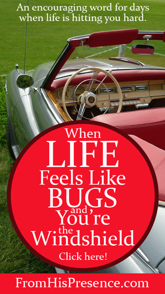 When Life Feels Like Bugs and You're the Windshield | By Jamie Rohrbaugh | FromHisPresence.com