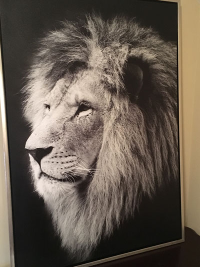 lion-artwork-400pxwide