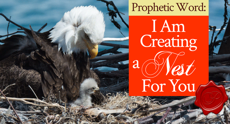 Prophetic Word: I Am Creating a Nest for You | by Jamie Rohrbaugh | FromHisPresence.com