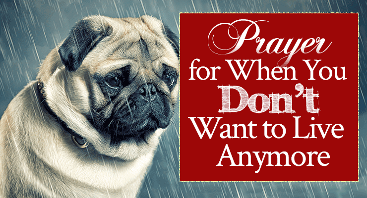Prayer for When You Don't Want to Live Anymore   by Jamie Rohrbaugh   FromHisPresence.com